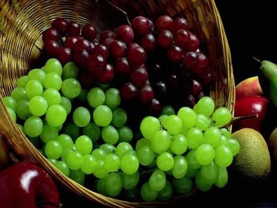 У пошуках ідеального сорту: елітні саджанці винограду в Україні