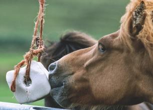 Кам'яна сіль у тваринництві - основа здорового раціону