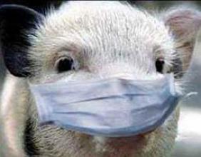 Щодо африканської чуми свиней