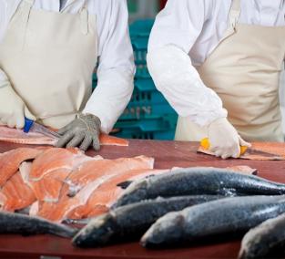 Рибний бізнес: відкриваємо власний цех