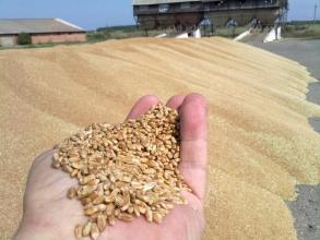 Сучасний сепаратор зерновий, який рекомендують професіонали