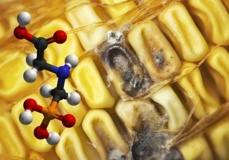 Сорбенти токсинів в кормах: особливості застосування