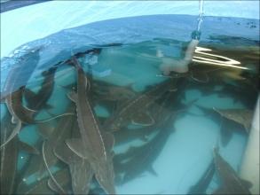 Розведення риби в УЗВ - чому варто зайнятися?