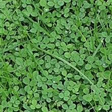 Газонна трава - релакс для тіла і душі!