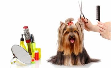 Навіщо проводити грумінг і тримінг собак?