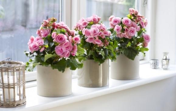 Цветы в доме - все ли создают утют?