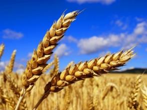АПО - інновація у сільському господарстві