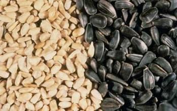 Чим корисне насіння соняшника?