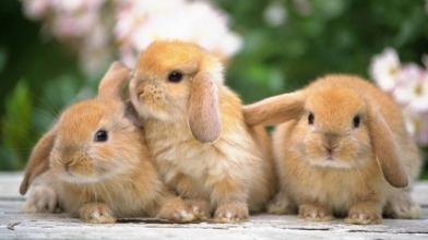Бізнес на кролях: вигідний стартап
