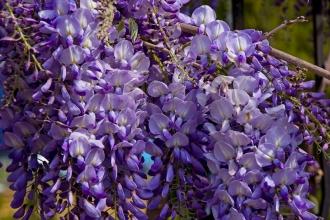 Як вибрати найкращі декоративні рослини для саду?