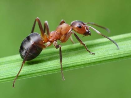 Кислота мурашина: призначення та сфера застосування