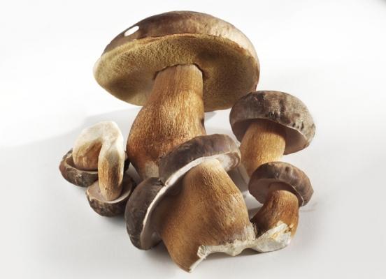 Заморозка білих грибів: смачно і корисно