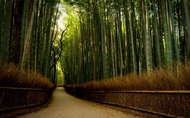 Декоративні дерева Україна: екзотичний бамбук
