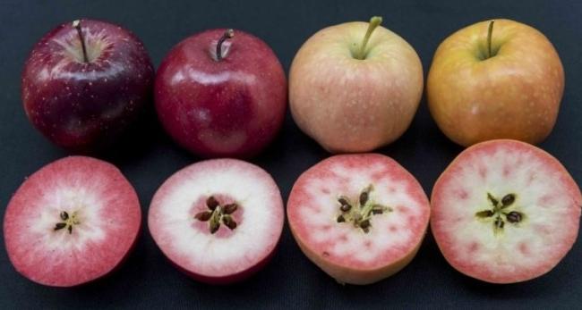 Купити яблука оптом — як вибрати найкорисніші?