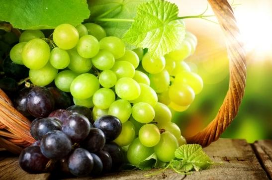 Які саджанці та живці винограду купити: сорти та їх властивості