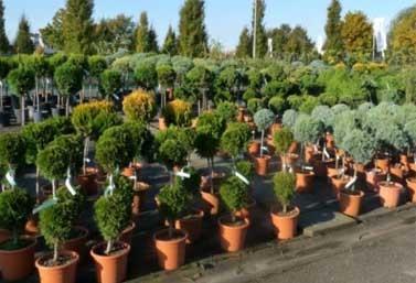 Вирощування декоративних рослин та де контейнери для саджанців купити?