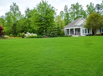 Эффективная и нетребовательна трава