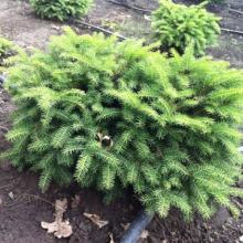 Лучшие декоративные растения для сада можно приобрести здесь!