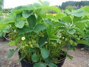 Пропонуємо насіння овочів та квітів, саджанці дерев та кущів