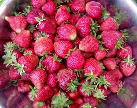 Купуйте саджанці ремонтантної полуниці на нашому сайті!