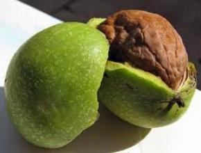 Саджанці грецького горіха французької селекції