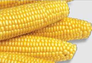 Насіння цукрової кукурудзи