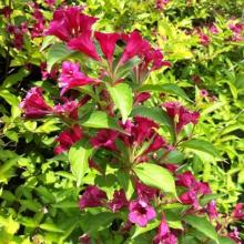 Пропонуємо декоративні рослини для дому в широкому асортименті