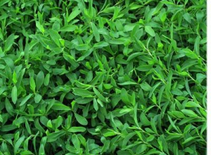 Газонная трава для ленивых от «Агро Свит»