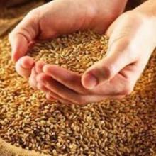 Реализуем посадочные семена