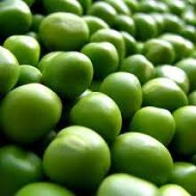 Предлагаем купить семена гороха