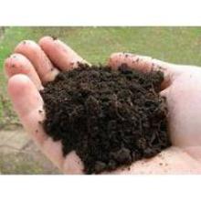 Купуйте торф для розсади та забезпечте успішне вирощування рослин