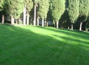 Продается газонная трава. Цена - от производителя