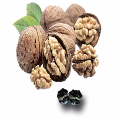 Грецкие орехи в шоколаде оптом