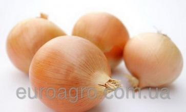 Купити насіння цибулі Syngenta (Сингента)