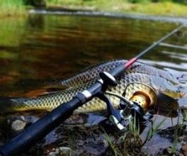 Снасти для ловли карпа: все необходимое для удачной рыбалки