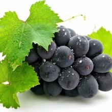 Купити садженці винограду оптом та вроздріб