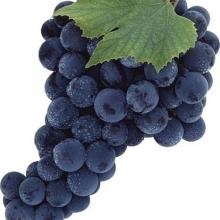 Садженці винограду оптом та вроздріб за найкращими цінами