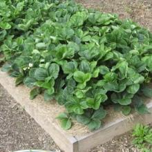 Купити розсаду для вашого саду