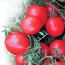 Купити насіння овочів оптом