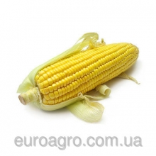 Кукурудза оптом від «ЄвроАгроТрейд»