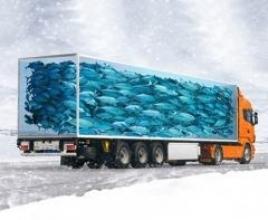 Перевезення замороженої риби — кращі умови для вашого товару