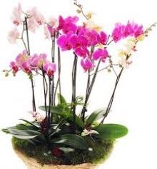 Насіння кімнатних рослин оптом - ТМ