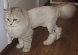 Интересует стрижка котов (Львов)? Запишитесь к профессионалам