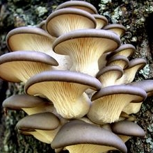 Купити міцелій грибів - в роздріб або опт