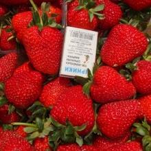 Купити саджанці полуниці - вигідна ціна