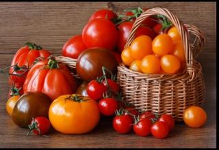 Продаж насіння томатів для теплиць в інтернет-магазині