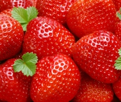 Купити саджанці полуниці - висока якість та вигідні ціни