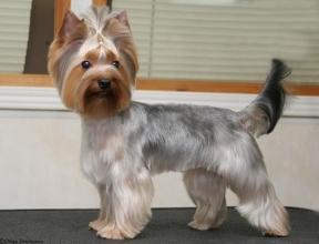Парикмахерская для собак (Львов) - лучший сервис у нас!