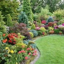 Купити декоративні рослини недорого