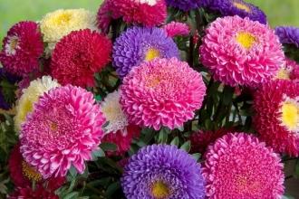 В продаже семена цветов, интернет-магазин